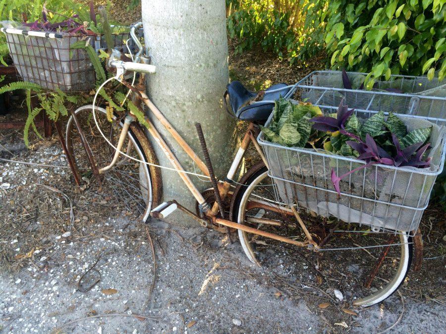 Bike-sharing program reaches first year