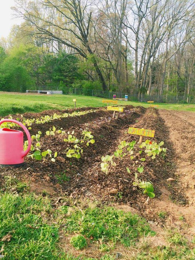 Sustainability is an interdisciplinary study