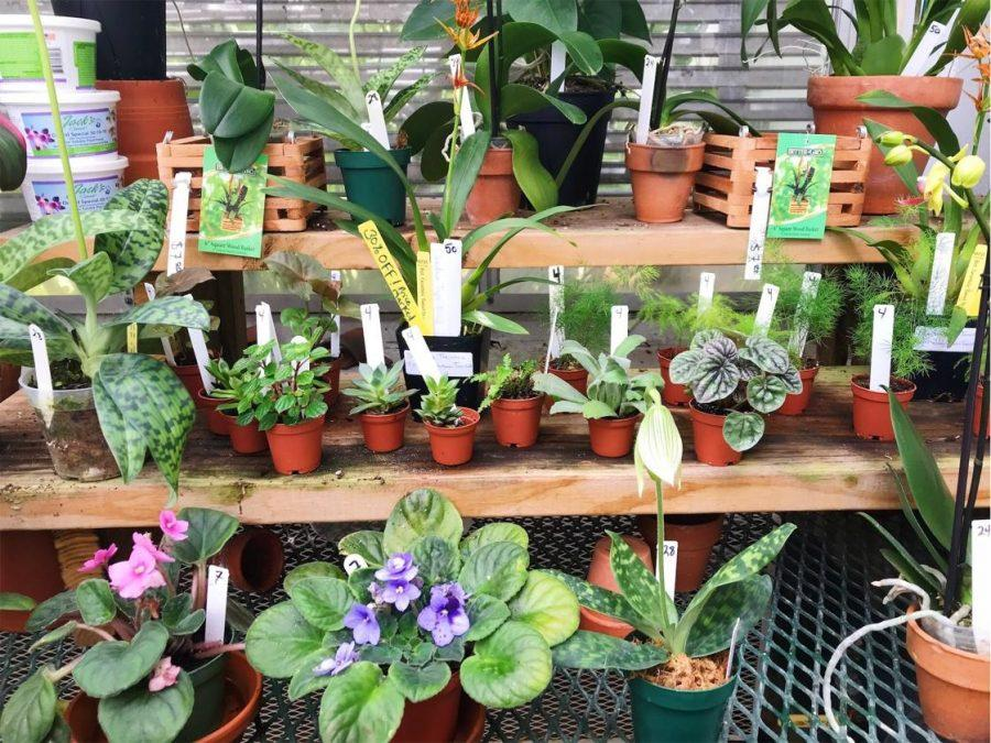 Plants Have An Array Of Benefits