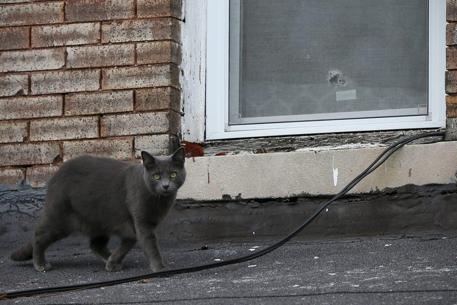A cat walks past a bullet hole in an upstairs window of a home where a woman was fatally shot overnight in the 6300 block of North Woodstock Street in North Philadelphia on Friday, Dec. 14, 2018. The woman was reportedly shot next to her newborn infant.