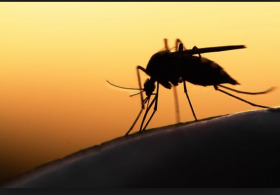 Biological Clocks May Be Our Next Defense Against Malaria
