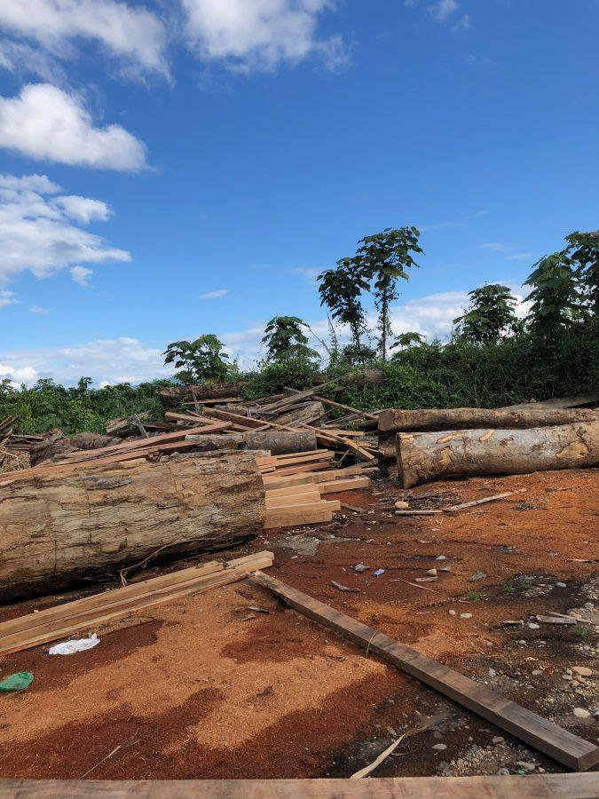 Madre de Dios' Plan To Save The Amazon