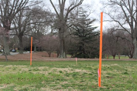 Proposed Construction Removes Heritage Trees